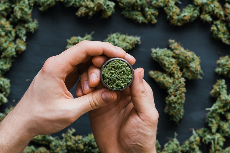 Hands hold cannabis in a small jar.
